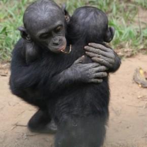 bonobohug